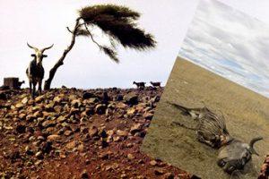 The Agriculture system – Tishrei – Ephraim