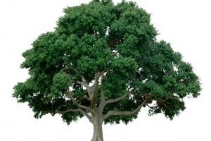 Your life is a tree bearing fruit